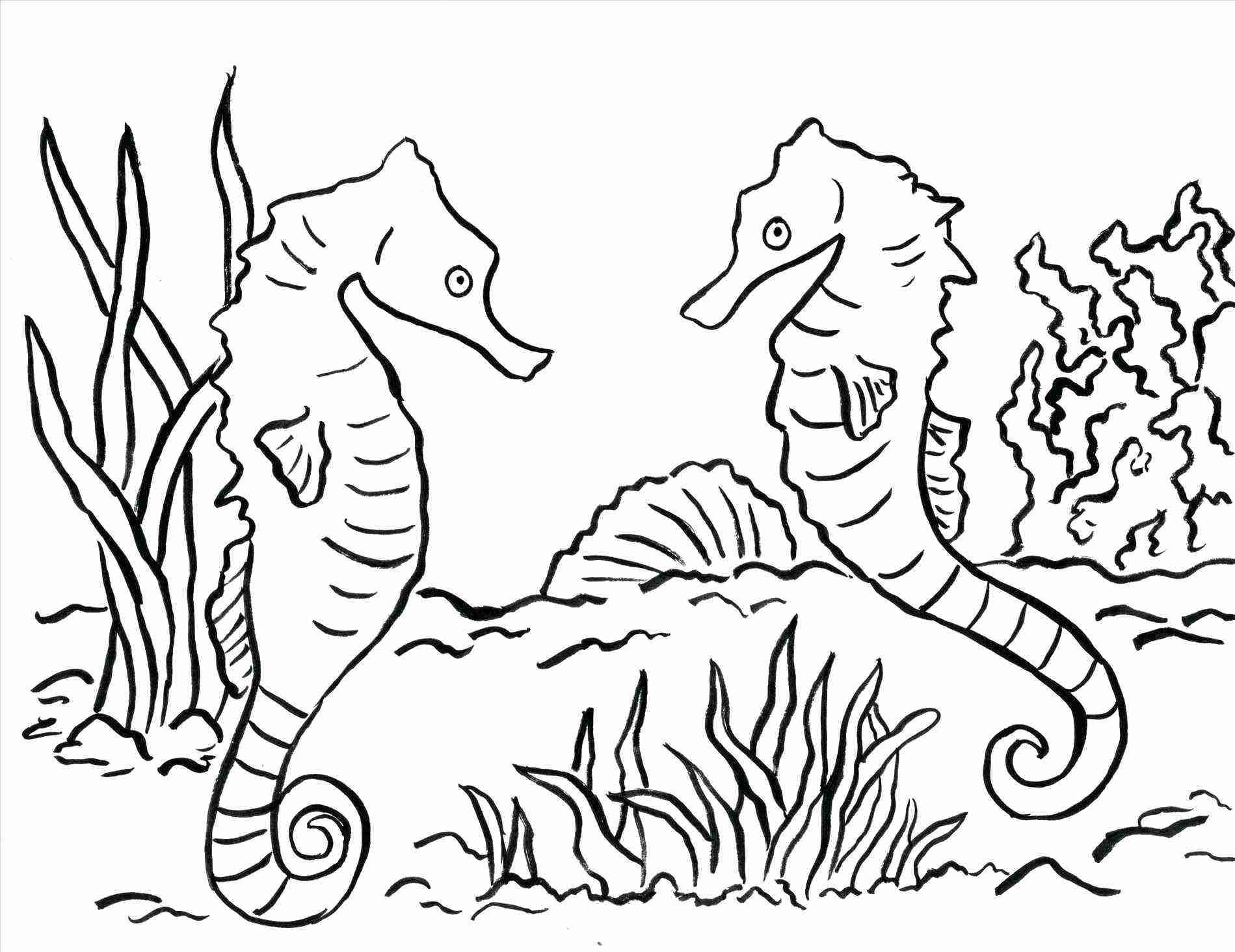 1899x1465 Free Printable Seahorse Coloring Pages For Kids Pleasing Sea Horse