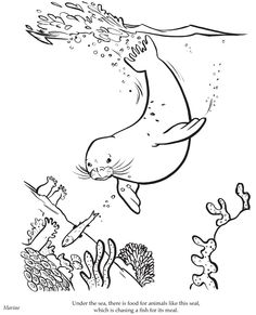236x291 Monk Seal Swimming Underwater Coloring Page Heart Smiles