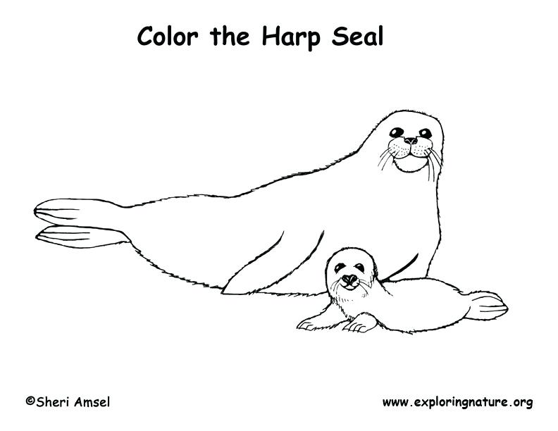 792x612 Seal Coloring Page Coloring Pages Seals Coloring Pages Seals