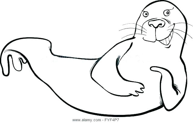 640x410 Seal Coloring Pages Baby Harp Seal Ng Pages Arctic Animals Fresh