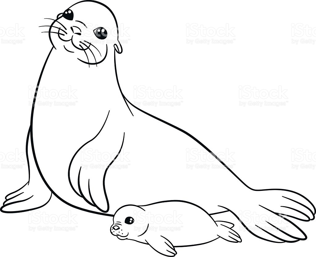 1024x835 Seal Coloring Pages Fresh Seal Coloring Pages Printable Page Image