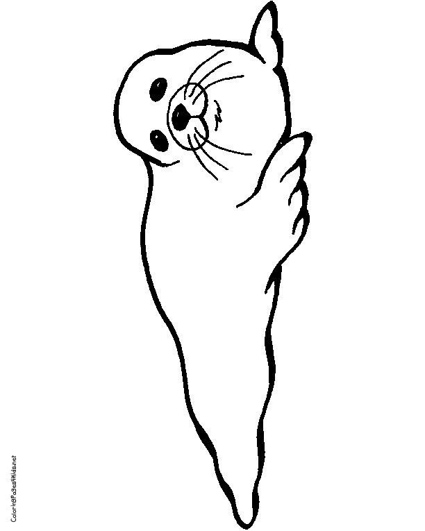 612x765 Seal Coloring Pages Harp Seal Clipart Coloring Page Pencil