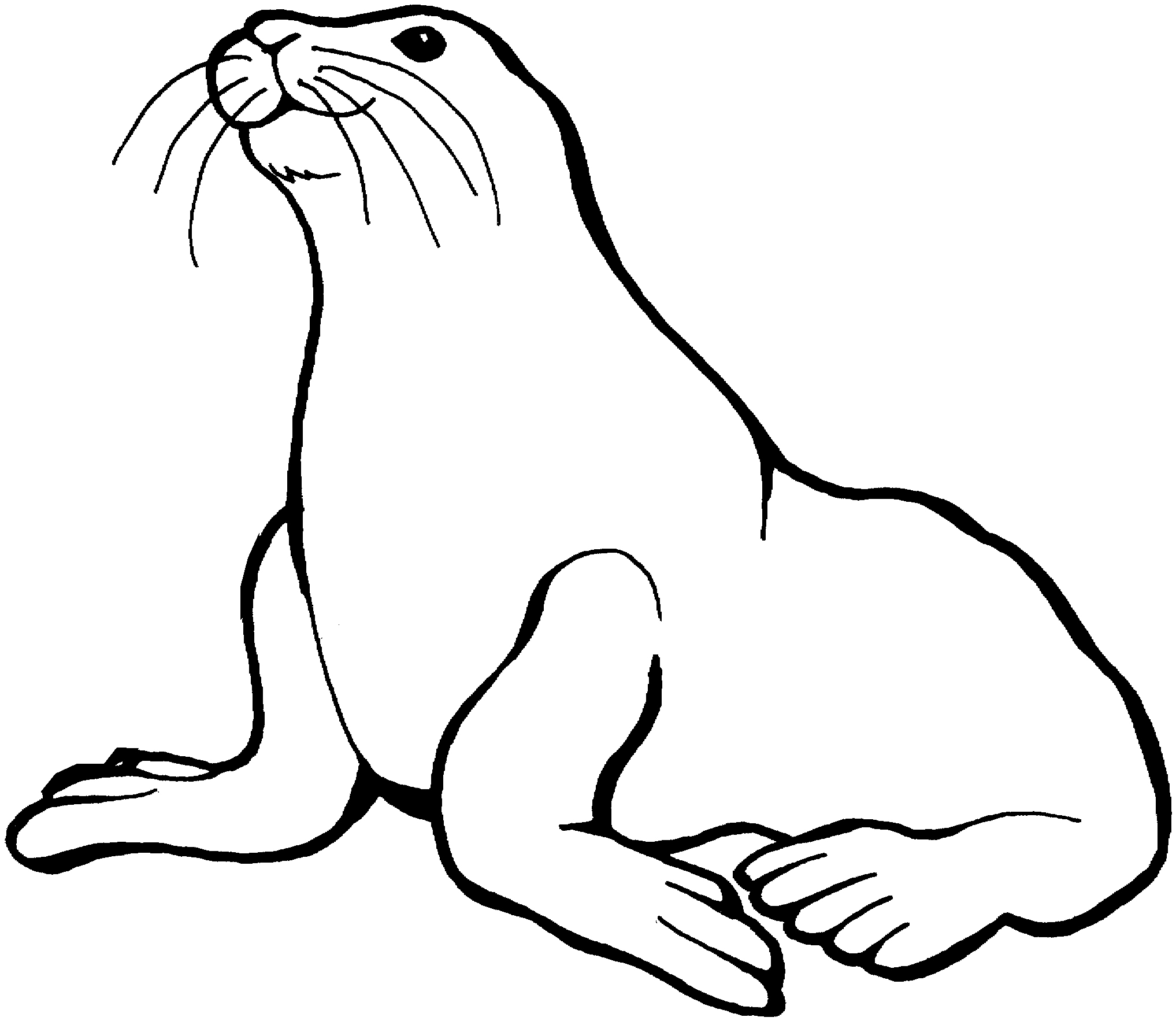 2035x1766 Seal Coloring Pages Inspirational Free Sea Lion Coloring Pages