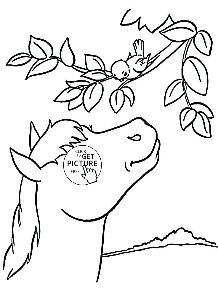 736x994 Coloring Pages Online Games Animal Coloring Pages Online Leopard
