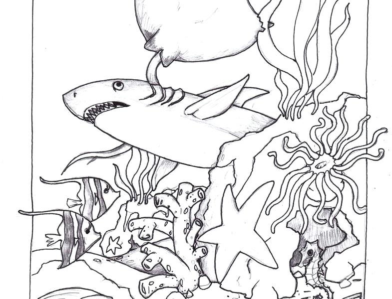 785x600 Lost Ocean Pictures Colored Marine Coloring Pages Animal Animals
