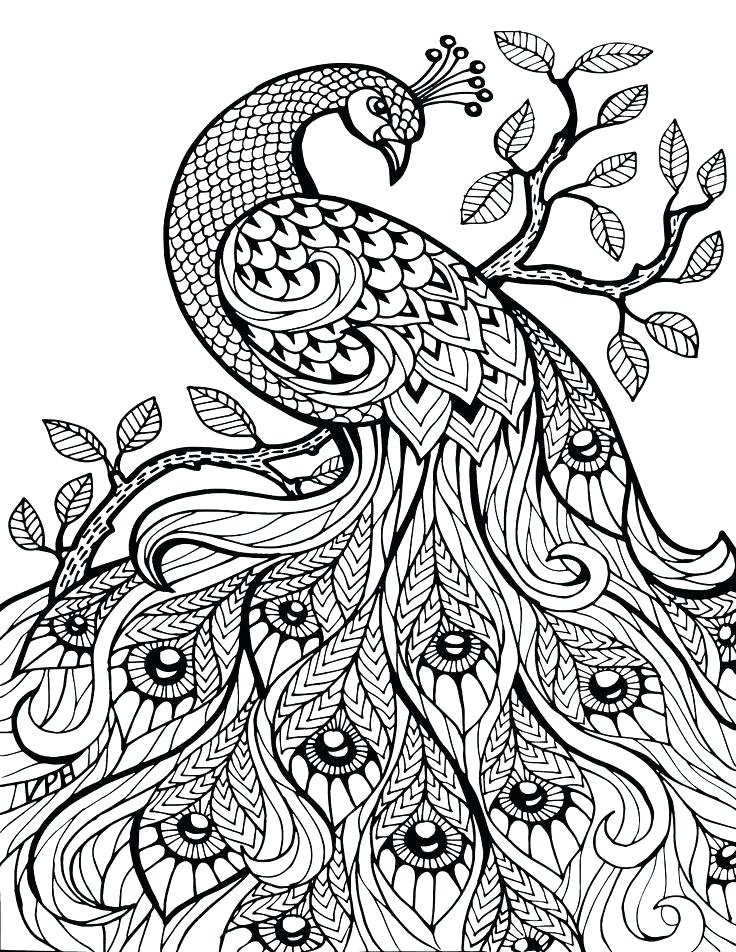 736x952 Ocean Habitat Pictures To Color Coloring Pages For Adults Seascape