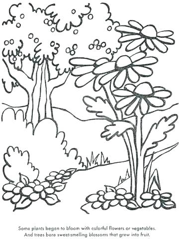 360x480 Plants Coloring Pages Grass Coloring Pages For Kids Color Plant