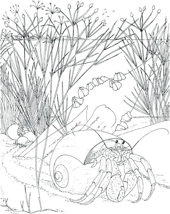 573x720 Seaweed Coloring Pages Printable Ocean Coloring Pages Free
