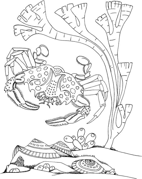 574x720 Seascape Coloring Pages Free Seascape Coloring Pages Ideas