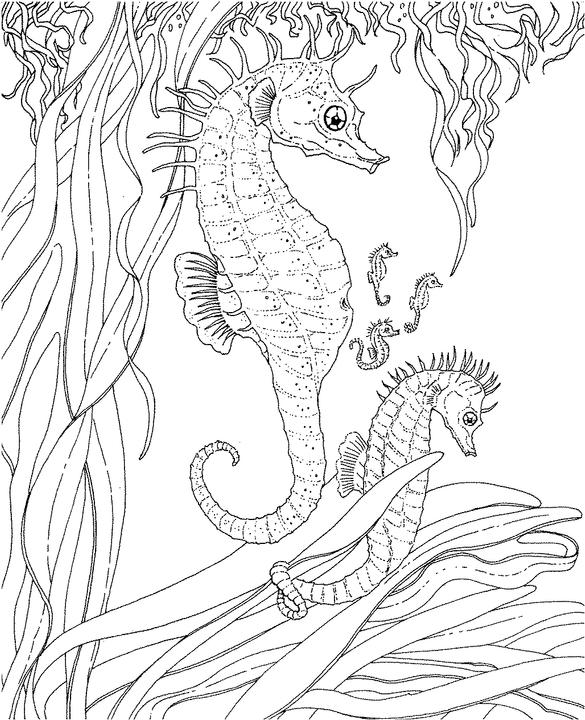 585x720 Seascape Coloring Pages Seascape Ocean Coloring Page