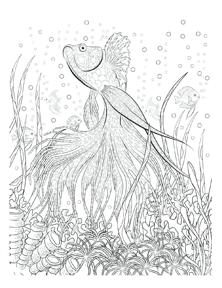 736x952 Seascape Coloring Pages Jgheraghty Site
