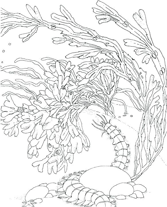 582x720 Coral Reef Coloring Pictures Printable Coloring Coral Coloring