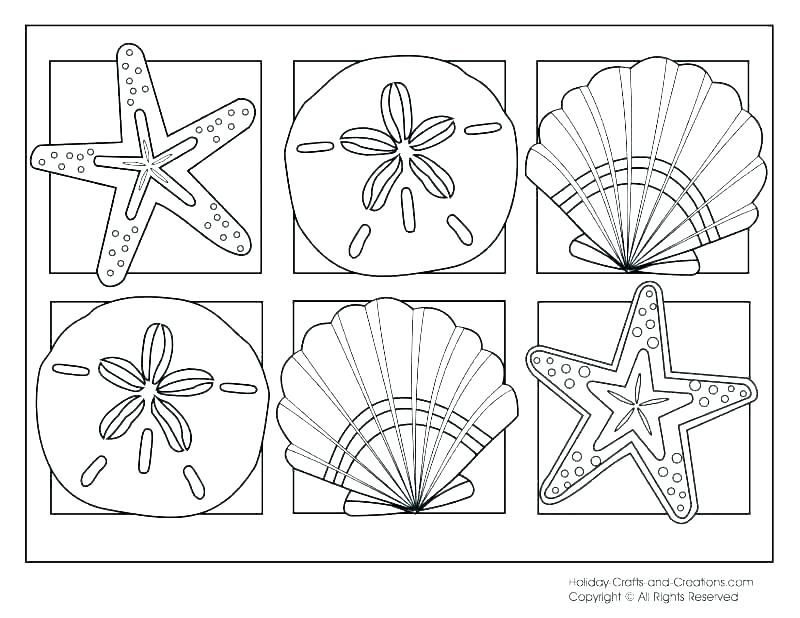800x618 Seashell Coloring Pages Sea Shell Coloring Page Sea Shell Coloring