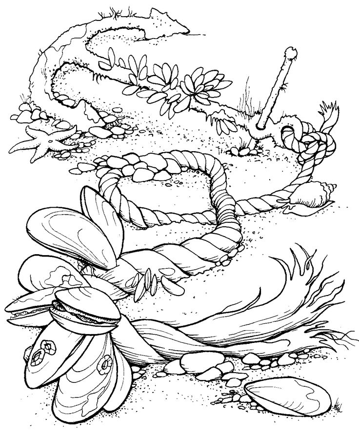 736x898 Best Beach Coloring Pages Images On Coloring Books