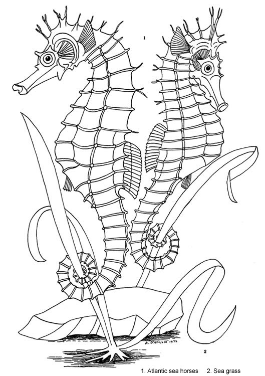 529x750 Seashore Life Coloring Book Welcome To Dover Publications Coloring
