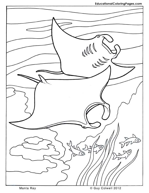 612x792 Sea And Seashore Book One Animal Coloring Pages For Kids