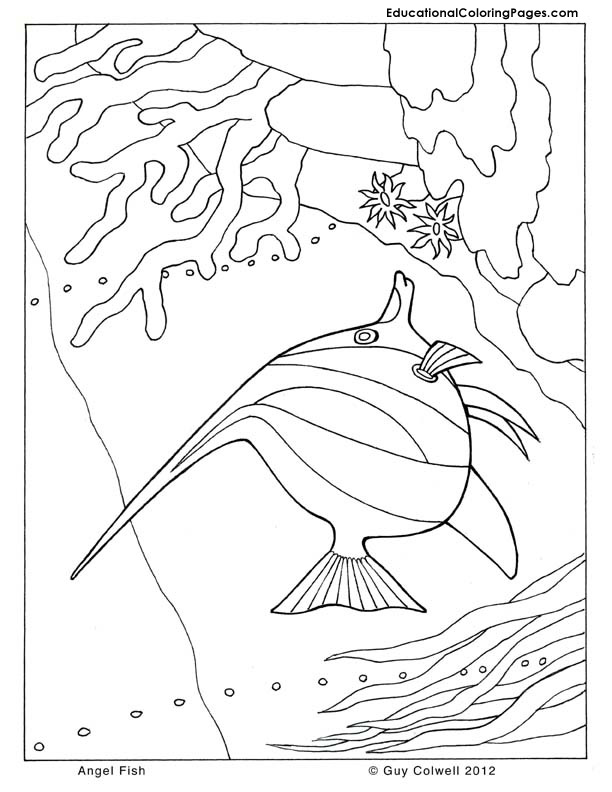 612x792 Sea And Seashore Book Two Animal Coloring Pages For Kids