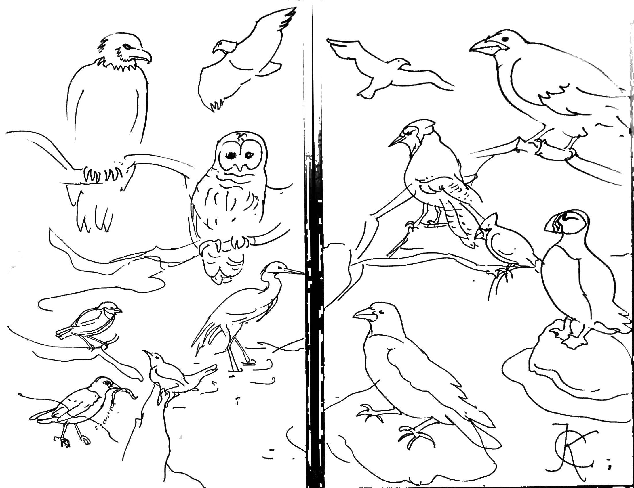 2203x1697 Seashore Coloring Pages