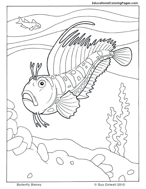 612x792 Seashore Life Coloring Book Also Fish Coloring Pages Coloring