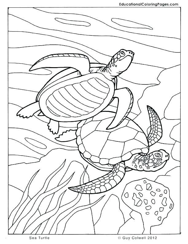 612x792 Seashore Coloring Pages Free Bliss Seashore Coloring Book Your
