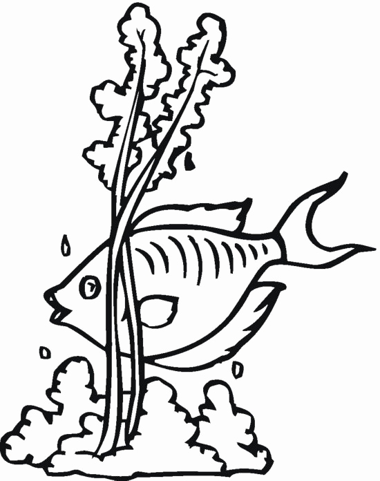 550x696 Seaweed Coloring Pages Photos Fish And Seaweed Coloring Pages