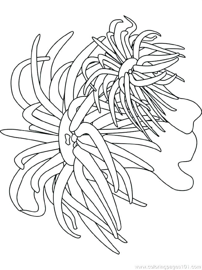 650x866 Coral Coloring Pages Seaweed Coloring Pages Seaweed Coloring Pages