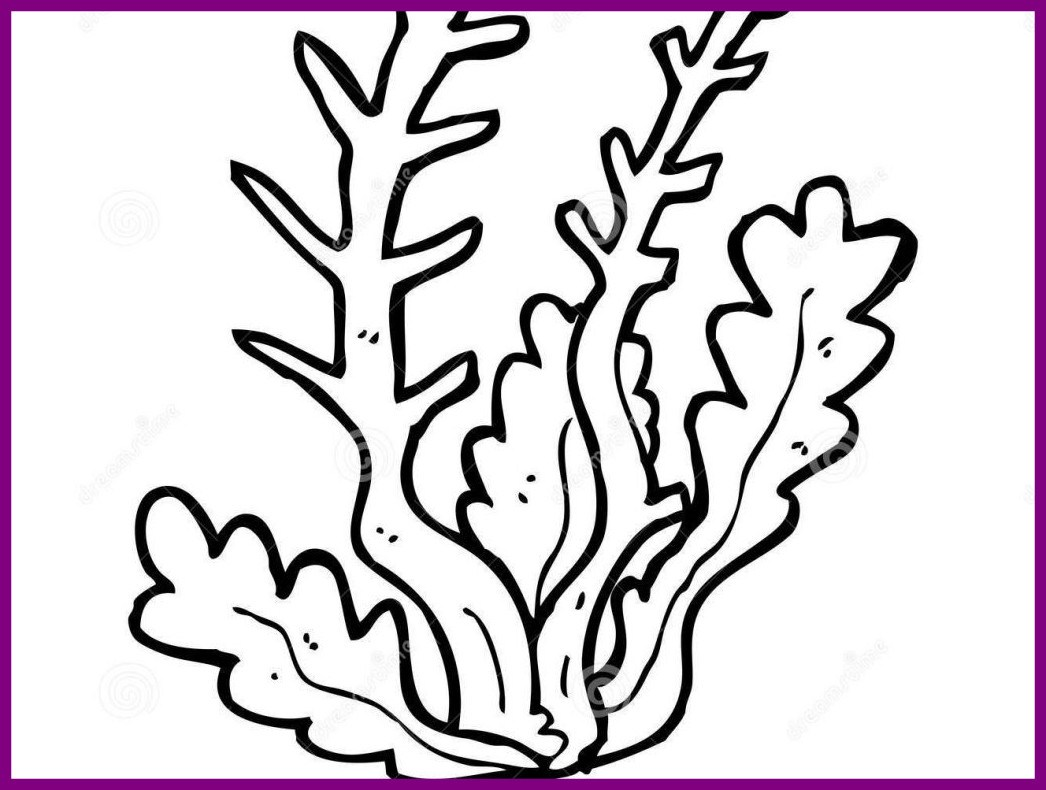 1046x790 Fascinating Seaweed Coloring Pages Learn Me For And Style Seaweed