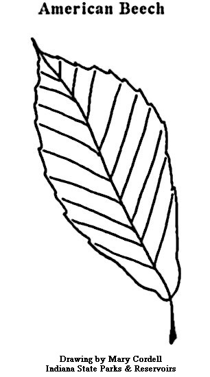 306x550 Dnr Coloring Pages