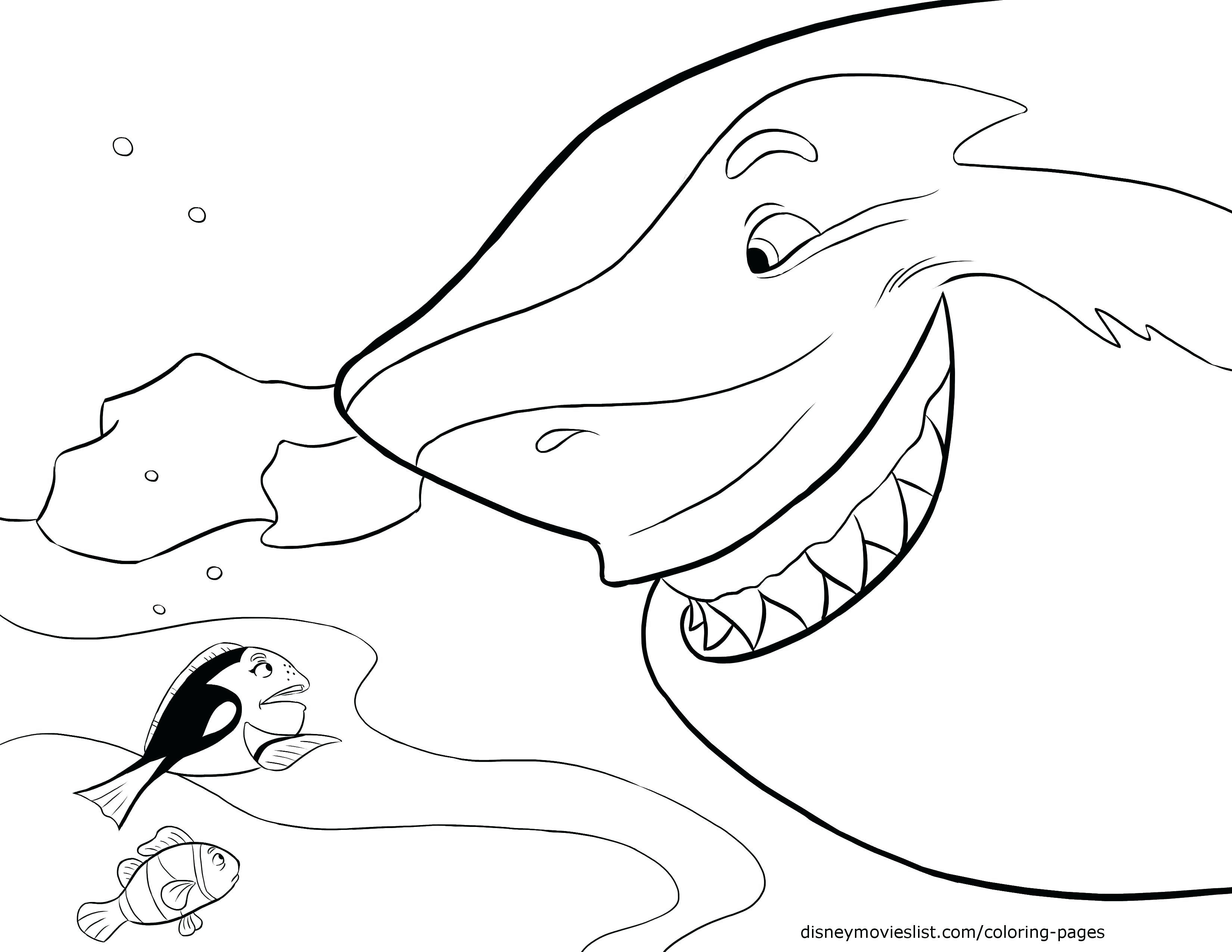 3300x2550 Pin Drawn Shark Coloring Page Pages Sharks And Dolphins Sharkboy