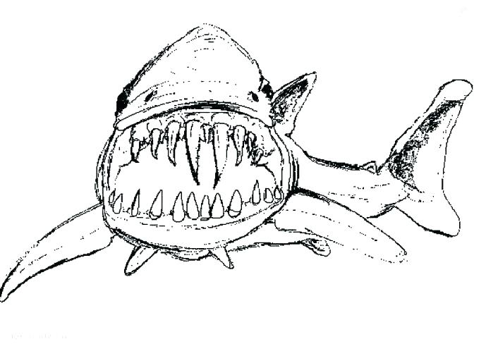 689x498 Shark Boy Coloring Page Coloring Pages Of Sharks Whale Shark