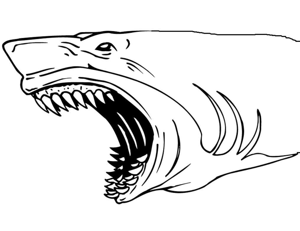 Shark Coloring Pages at GetDrawings.com | Free for personal use ...