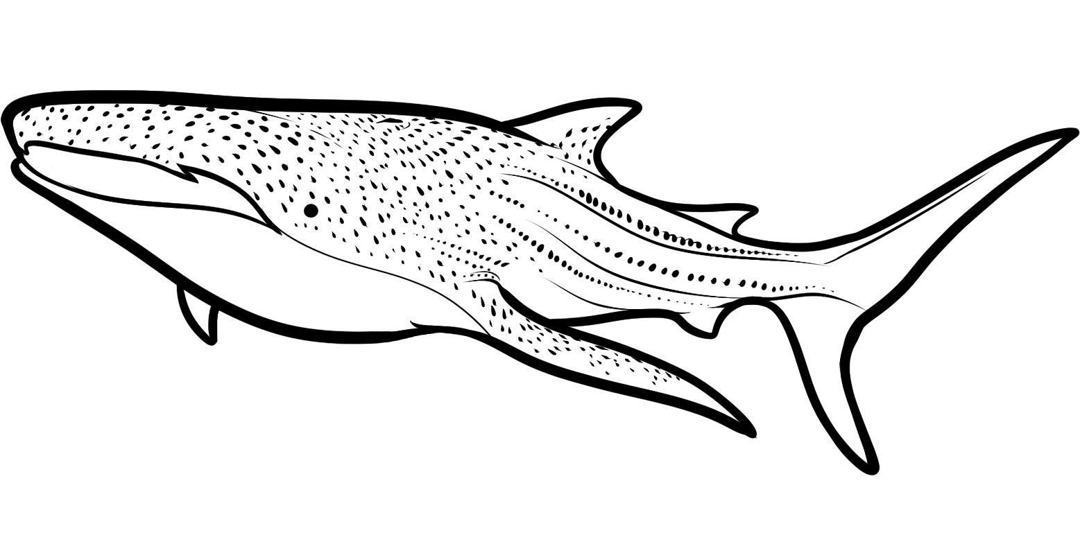 This is a graphic of Shark Coloring Pages Printable pertaining to shower shark