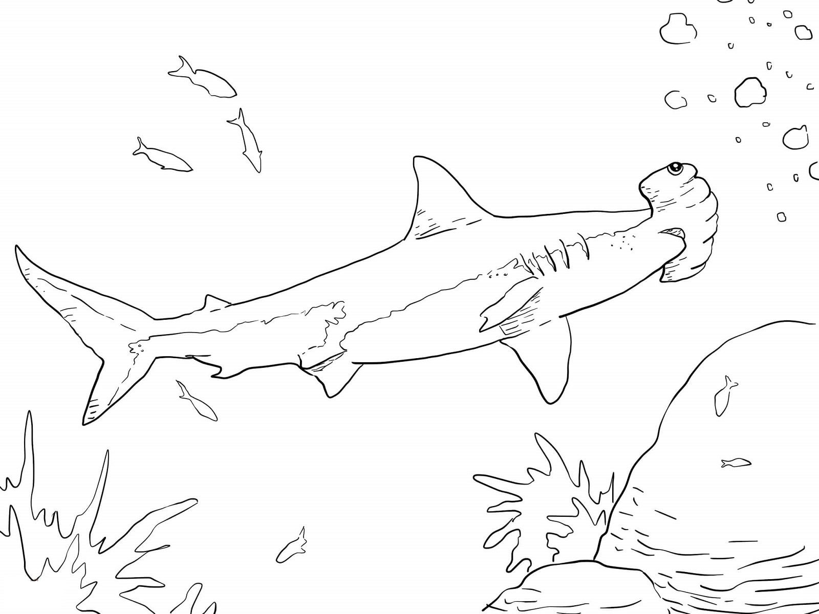 1600x1200 Hammerhead Shark Coloring Page