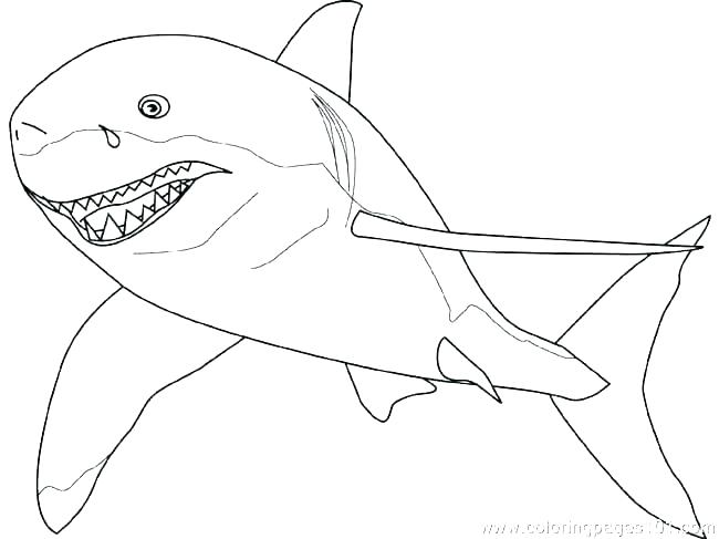 650x487 Hammerhead Shark Coloring Page Color Pages Of Sharks Sheet