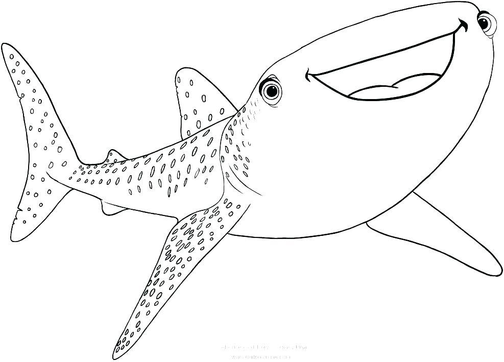 987x709 Shark Color Pages Color