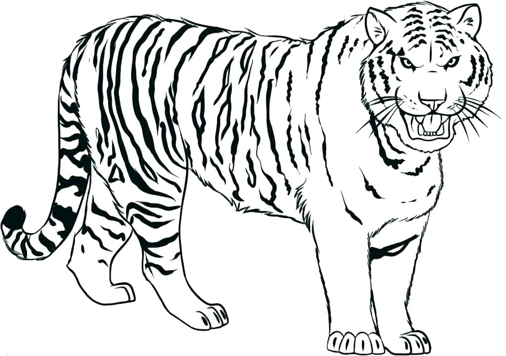 1024x721 Shark Coloring Pages Printable Free Shark Coloring Pages Tiger