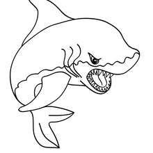 220x220 Shark Picture Coloring Pages