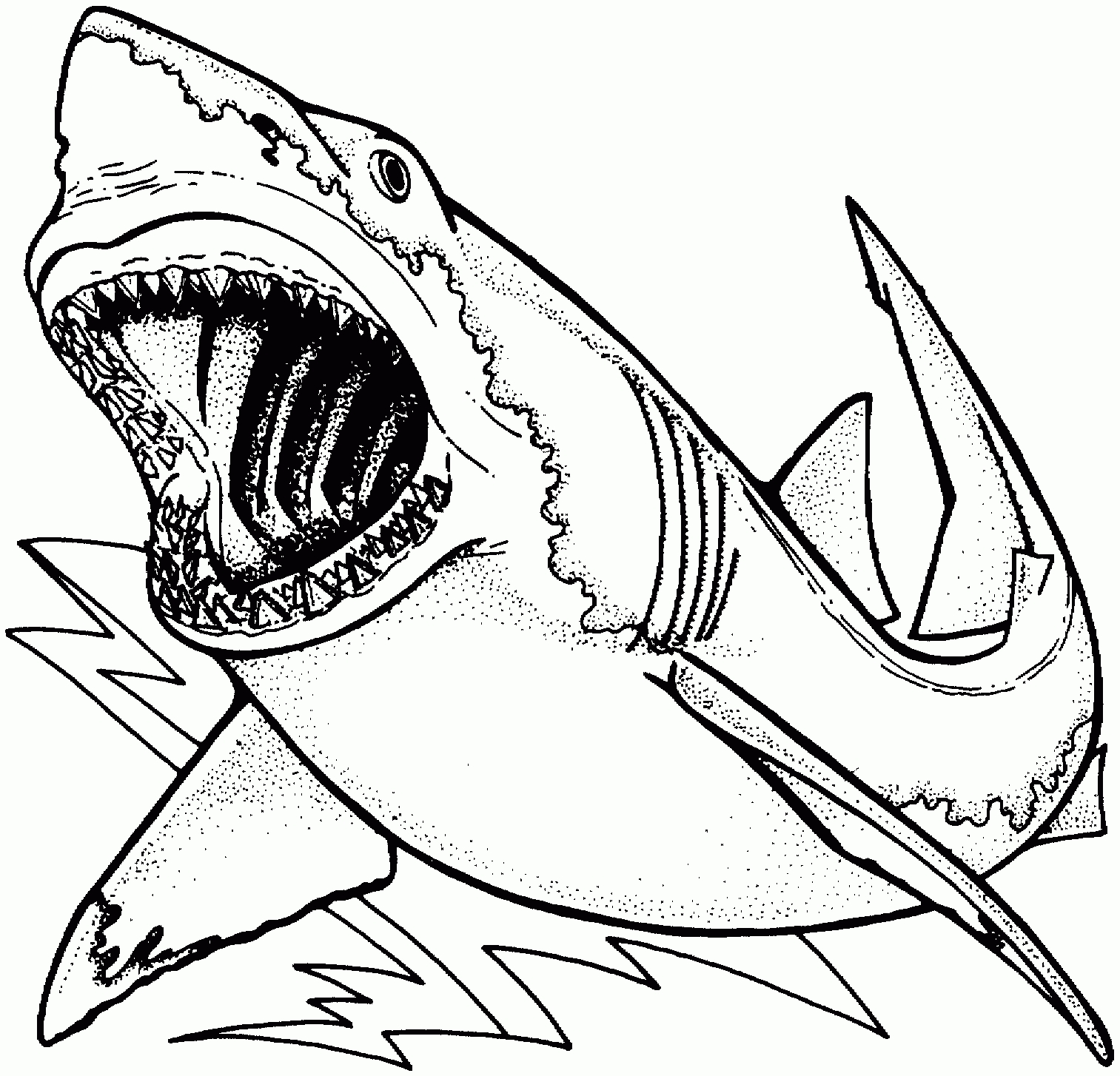 1513x1454 Great White Shark Coloring Pages With Wallpapers Mobile Great