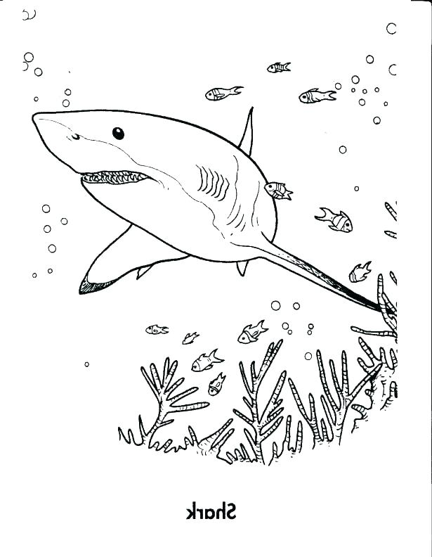 615x792 Coloring Pages Sharks Whale Shark Coloring Pages Whale Coloring
