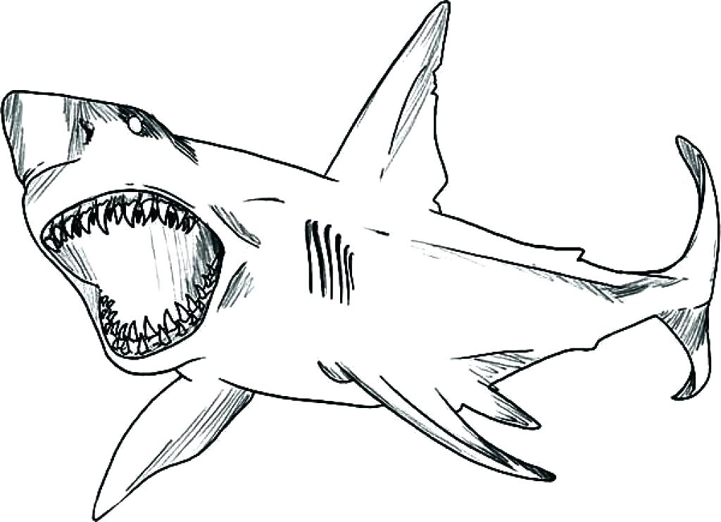 1024x742 Hammerhead Shark Coloring Page Shark Coloring Pages Printable