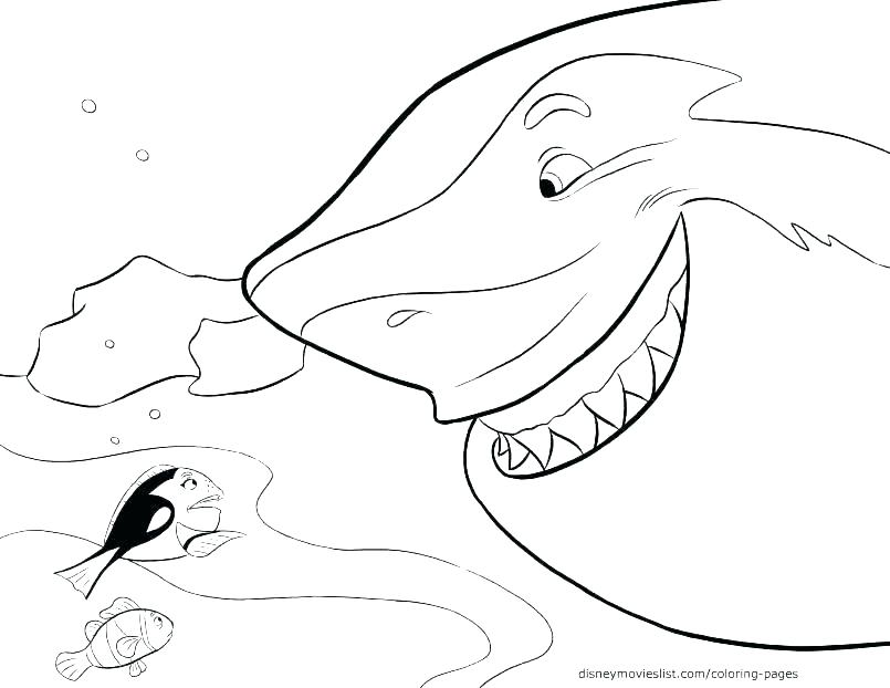 805x622 Shark Coloring Pages To Print Shark Coloring Pages Printable Great