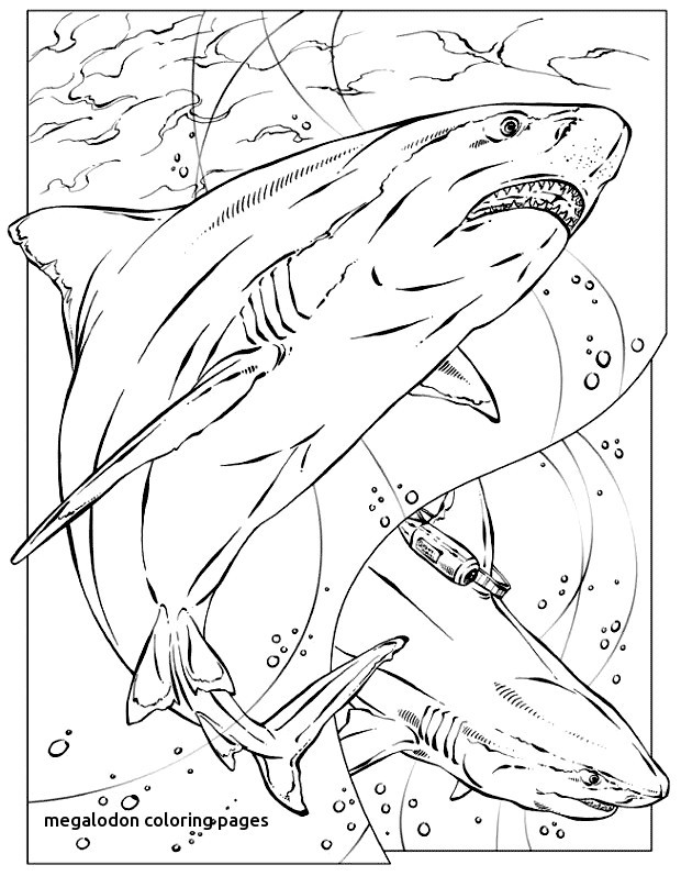 The best free Megalodon coloring page images. Download ...