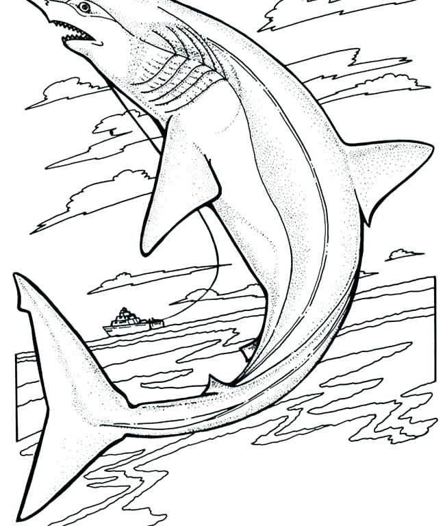 650x768 Free Printable Great White Shark Coloring Pages Kids Coloring Free