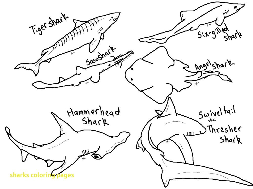 1024x768 Rare Shark Teeth Coloring Pages Sharks With To Print Printable