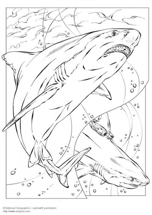 Sharknado Coloring Pages