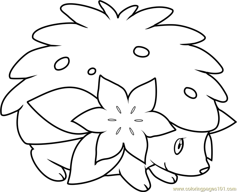 800x647 Shaymin Coloring Pages