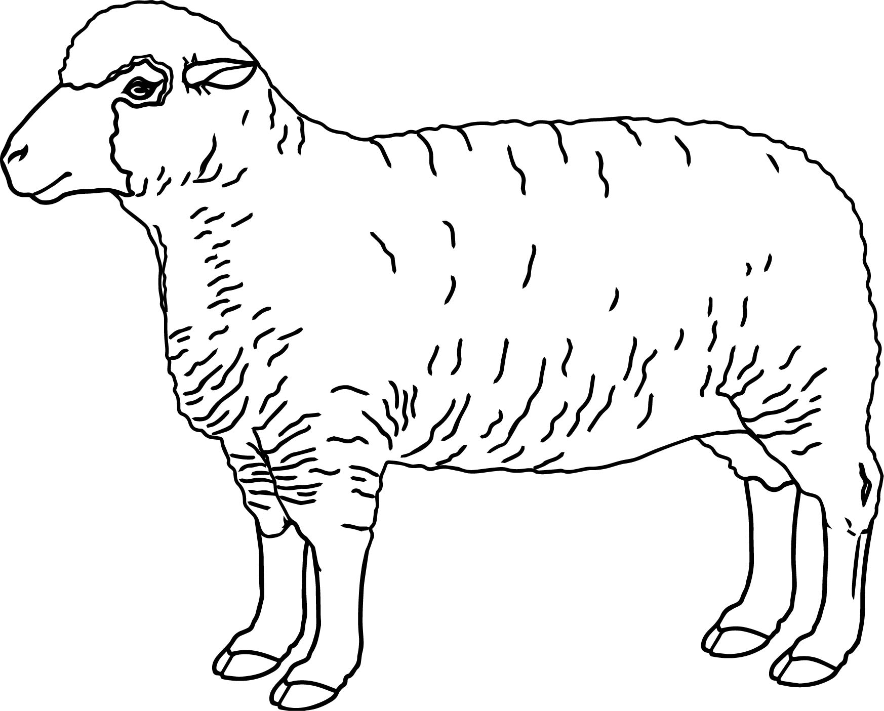 The Best Free Baa Coloring Page Images Download From 11 Free