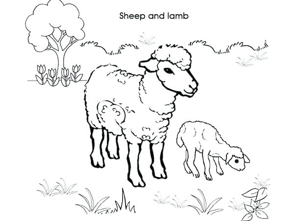 Sheep Coloring Pages Free at GetDrawings.com | Free for personal use ...