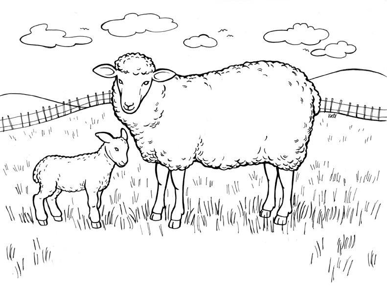 791x608 Free Sheep Coloring Pages