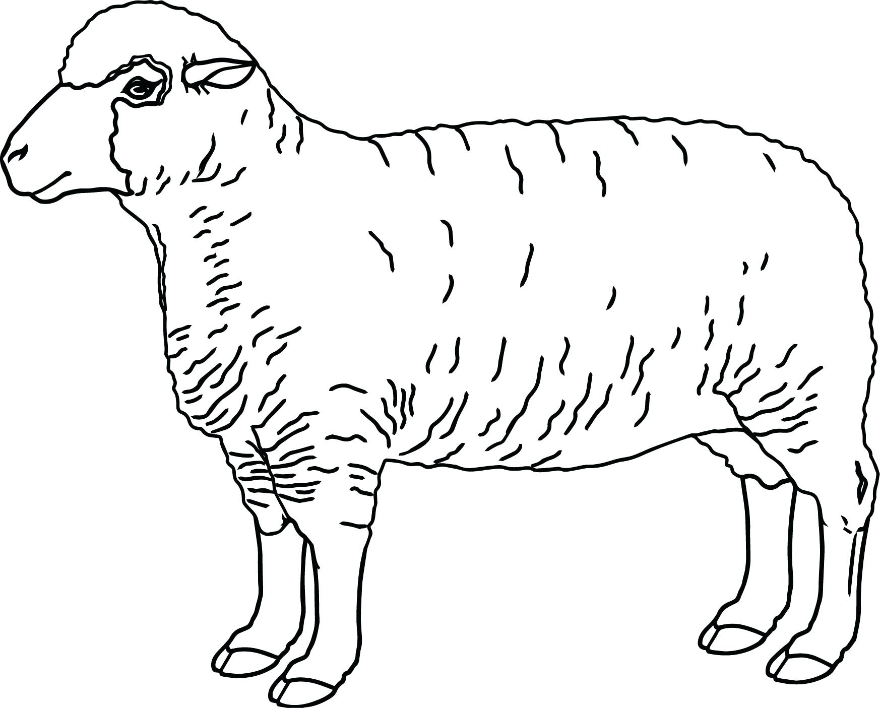 1746x1405 Timely Sheep Coloring Pictures Realistic Page Pages Preschool